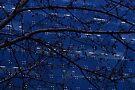 Starry night by reflexio