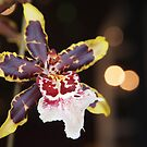 Yellow Tipped Orchid by Linda  Makiej