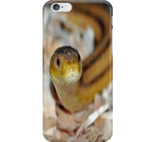 slither, my pet snake iPhone Case/Skin