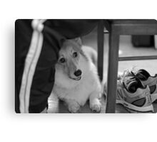 """Did Somebody Say Walk ? "" Canvas Print"