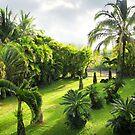 Yard in Paradise by Ellen Cotton