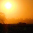 early morning sunrise fogbank by SDJ1