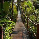 suspension bridge by supergold