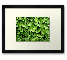 Clovers (available in iphone, ipod, & ipad cases) Framed Print