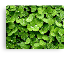 Clovers (available in iphone, ipod, & ipad cases) Canvas Print