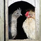Looking Sunny Out There, Chook by Barrie Woodward