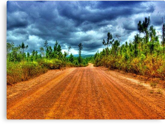 Mountain Pine Ridge Road in San Ignacio - Belize, Central America by Jeremy Lavender Photography