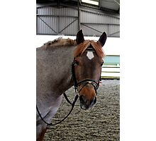 Nosey Normy Photographic Print
