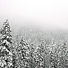 Snowy Trees by kchase
