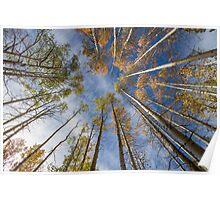 Meadow at Spooner Lake - Tahoe Poster