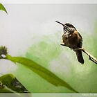 hummingbird by tammy lee bradley