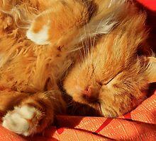 So nice to take a nap in the sun. by Birgit Van den Broeck