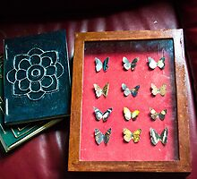 Display Box and Photo Albums by JessicaLonie