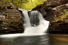 In The Refreshing Spray Of Murray Reynolds Falls by Gene Walls