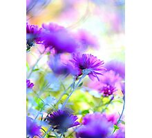 floral fantasy.. Photographic Print