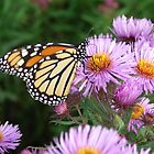 Butterfly on Purple by Martha Medford