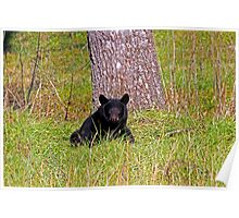 Black Bear in Cades Cove Poster