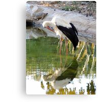 Nature Mirror Canvas Print