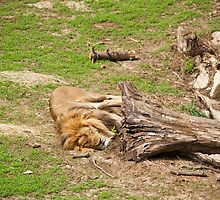 Lazy Day by jrphotography05