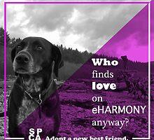 SPCA Advertisement by AmandaMunsell