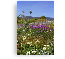 Namaqualand#1 - South Africa Canvas Print
