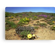 Namaqualand#2 - South Africa Canvas Print