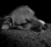 Puppy On Pause by JeannieBlue