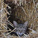 Hiding in the Bales by Helen Greenwood
