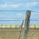 Farm Fenceline by Helen Greenwood