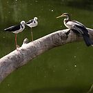 Two Stilts and a Dart by Sandra Chung