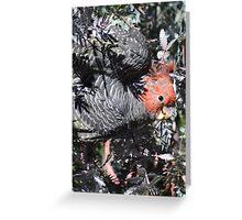 Male Gang Gang Cockatoo Greeting Card