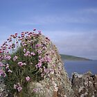 Coast Path Flowers by Francis Drake