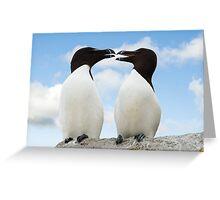 Razorbills chatting, Saltee Island, County Wexford, Ireland Greeting Card
