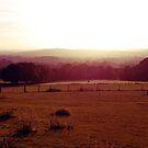 Sunlit fields by babibell