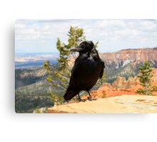 Raven at Bryce Canyon National Park,Utah,USA Canvas Print