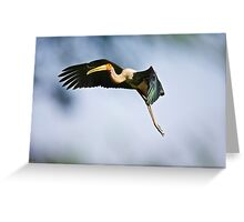 Painted Stork in flight - Bharatpur Greeting Card