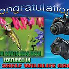 Top Shelf Wildlife Group Banner by TJ Baccari Photography
