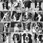 Border Collies  by Karen Havenaar