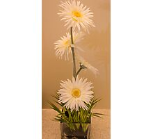Four Daisies Photographic Print