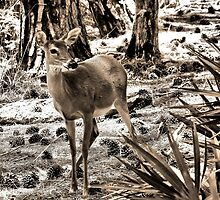 The Doe by RickDavis