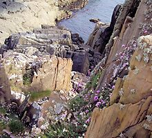 Cliff Face & Flowers by Francis Drake