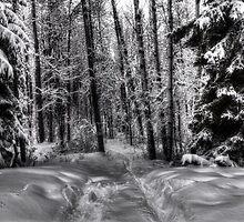 Winter Walk by Keri Harrish
