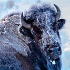Frosty Bison Cow by Rose Vanderstap