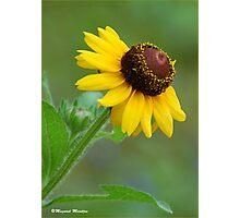 YELLOW SIMPLICITY -  EENVOUD IN GEEL Photographic Print