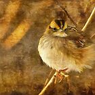 White Throated Sparrow by Lois  Bryan