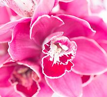 Brillant Tiger Orchids by daphsam