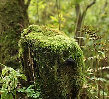 Moss covered by mrivserg