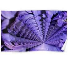 Hyacinth in Abstract Poster