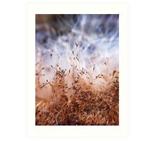 Bull rush seeds Art Print