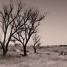 Old trees by WendyPhilip